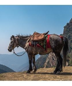 Корма для маралов и лошадей